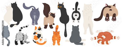 Obraz na plátně Cats poses behind. Cat`s butts. Flat design clipart