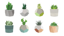 Small Succulent And Cacti Plan...