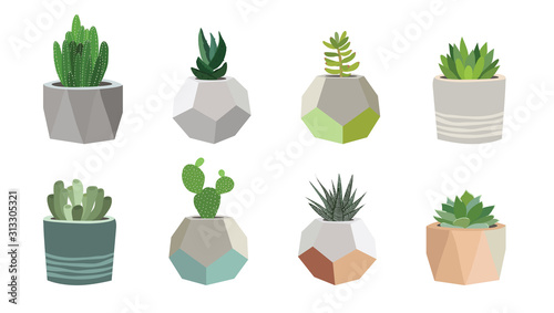 Fototapeta Small succulent and cacti plants in pots, vector illustration