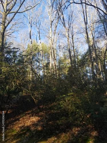 forest, tree, nature, trees, autumn, landscape, spring, green, wood, sky, woods, park, leaf, fall, sun, leaves, pine, season, grass, foliage, sunlight, path, road, light, blue