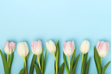 A Row Of Tulips With Copy Spac...