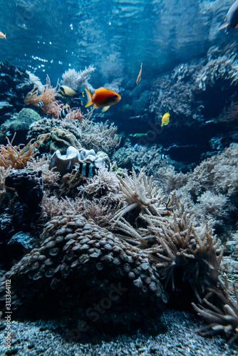 kolorowe-podwodne-skaliste