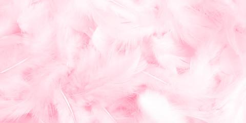 beauty aesthetic fresh feather illustration background