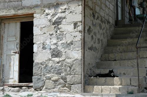 Photo An ajar door and cat on the stepp
