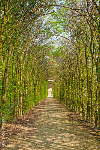 PARMA, ITALY - APRIL 18, 2018: The alley in the park of palace Palazzo Ducale in La Reggia di Colorno Wallpaper Mural