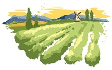 Abstract Landscape With Vineyard / Vector Illustration, Wheat Fields And Meadows