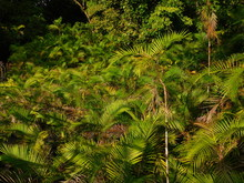 Ferns In Costa Rica