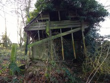 Landscape Of Derelict Disused Abandoned Shed Hut Wooden Building In Natural   Forest Rural Countryside Surroundings With Vibrant Green Moss On Broken Planks Of Wood Ivy Plants Sheltered By Trees