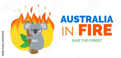 Obraz australia in fire koala bear on the tree ecology catastrophe banner design - fototapety do salonu