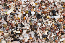Heap Shells Of Molluscs On The Sand At Low Tide