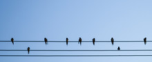 A Silhouette Of Birds On Wires...