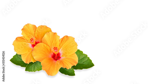 Orange Hibiscus flowers and space for text Canvas Print