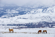 Winter At The Horse Ranch In T...