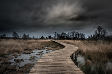 Dark Moody Sky At Limburg, National Park De Groote Peel In The Netherlands. Wooden Pathway Through The Protected Wetlands.