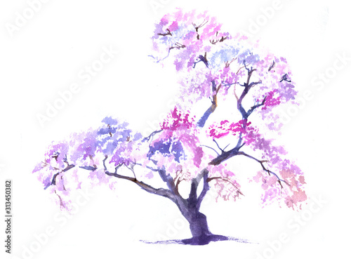 Fototapeta Watercolour sakura blossom pink tree isolated on white