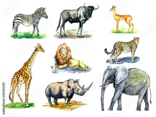 kolekcja-dzikich-zwierzat-afrykanskich-zebra