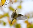 close up on flying bird in autumn forest