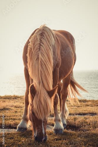Cuadros en Lienzo  caballo
