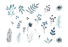 Hand Drawn Collection Of Plant...