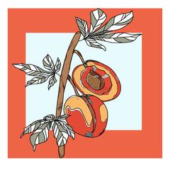 vector fruits apricot peach illustration vitamin fresh color