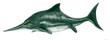 イクチオサウルス ジュラ紀後期のヨーロッパの海域に生息。イルカ型のもっともポピュラーな魚竜類。体形から最も進化した魚竜であり、イルカのように胎生であった。骨格構造は現代のイルカやクジラに近似しており、行動も似ている。ただ尾びれは縦型で魚類に近く、イルカやクジラが水平な尾びれを持っていたのに比して縦型で魚のように左右に動かして推進していた。全長2メートル。