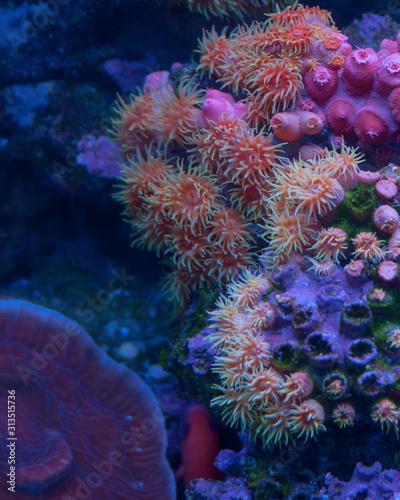 Aquarium Dwellers