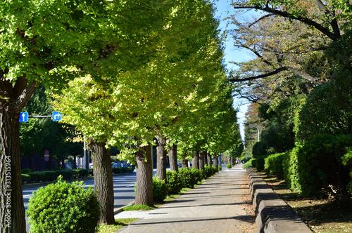 Photo 銀杏の街路樹のある歩道を撮影した写真