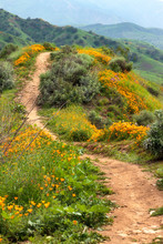 Hiking Trail In The Hills Of C...