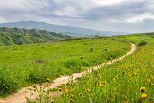 Hiking Path In Chino Hills Sta...