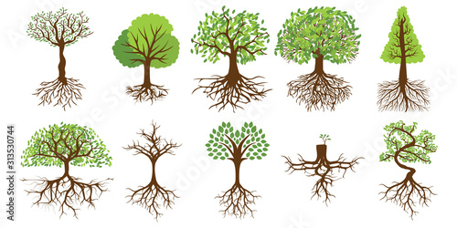 Tree vector set collection graphic clipart design