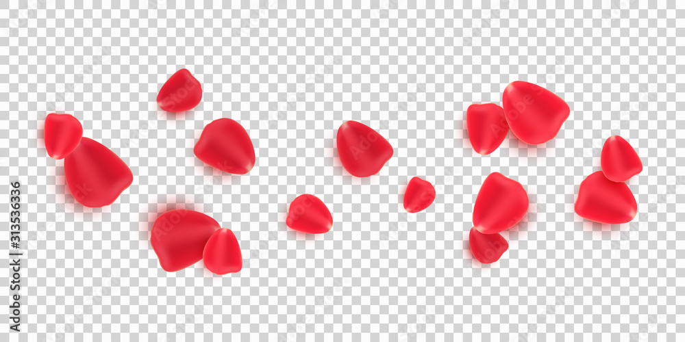 Fototapeta Scattered red rose petals isolated on transparent background. Valentine's Day. Romantic flowers for Valentine's Day or wedding. Vector illustration