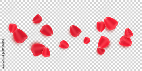 Obraz Scattered red rose petals isolated on transparent background. Valentine's Day. Romantic flowers for Valentine's Day or wedding. Vector illustration - fototapety do salonu