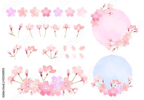 Obraz  水彩 手描き風 桜のイラスト素材セット - fototapety do salonu