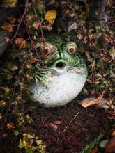 A Hidden Frog