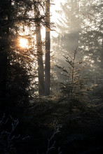 Sunlight Falling Through Leaves With Godrays In Winter Forest