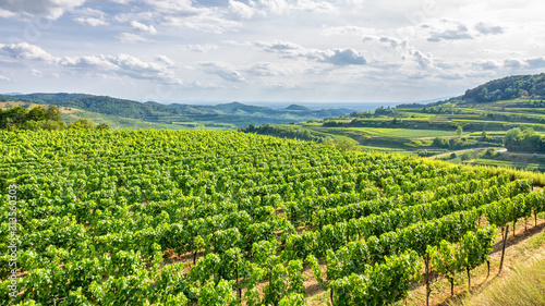 Photo aerial view vineyard scenery at Kaiserstuhl Germany