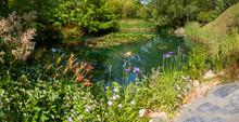 Jardin - Fleurs Bordant Une Mare