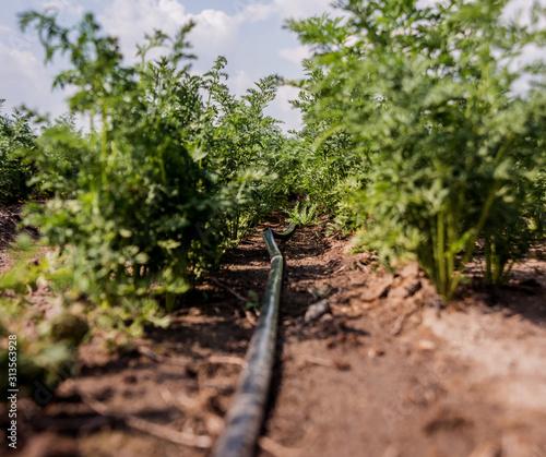 Canvas Print Drip irrigation system