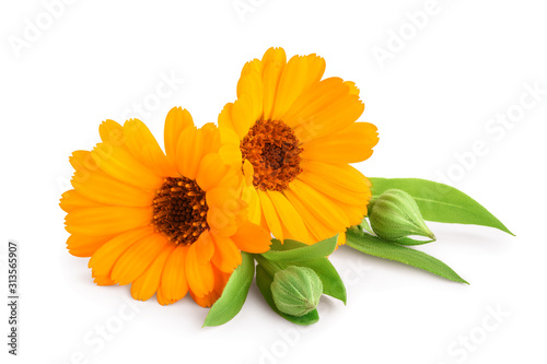 Obraz Calendula. Marigold flower with leaves isolated on white background - fototapety do salonu