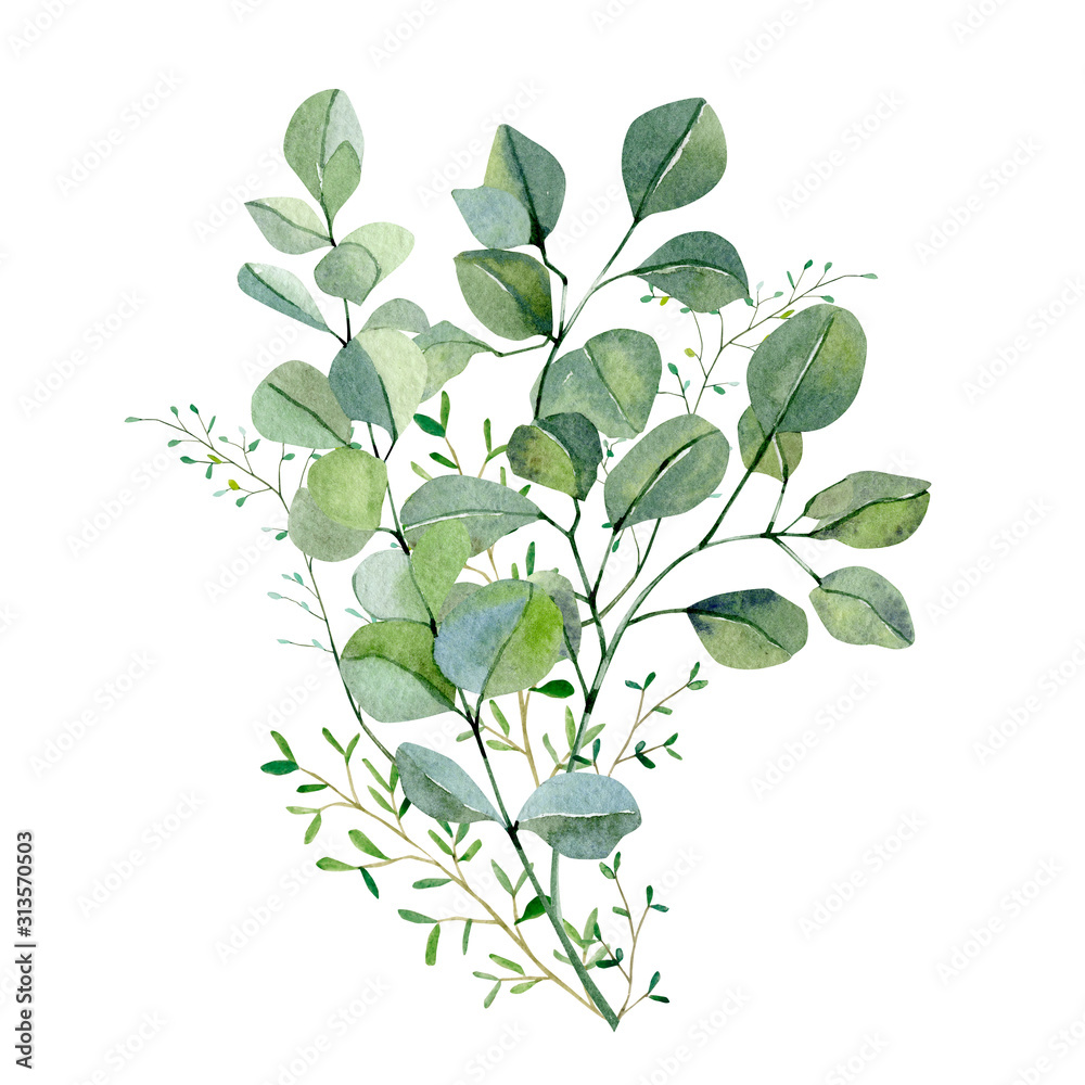 Fototapeta Watercolor hand painted bouquet silver dollar eucalyptus and green plants. Frolar branches and leaves isolated on white background.  Greenery illustration for design, card, poster, banner