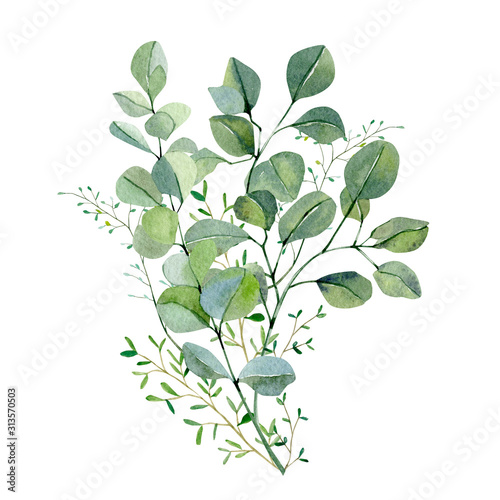 Fototapeta Watercolor hand painted bouquet silver dollar eucalyptus and green plants. Frolar branches and leaves isolated on white background.  Greenery illustration for design, card, poster, banner  obraz