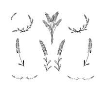 Lavender Vector Doodle Illustr...