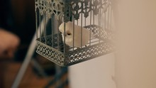 A Toy White Polar Owl Sits In A Vintage Cage. Indoors. Decoration For The Holiday.