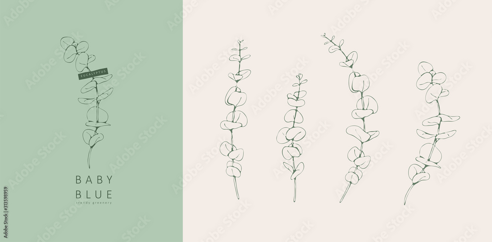 Fototapeta eucalyptus baby blue logo and branch. Hand drawn wedding herb, plant and monogram with elegant leaves for invitation save the date card design. Botanical rustic trendy greenery