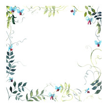 Square Frame From Sweet Pea. W...