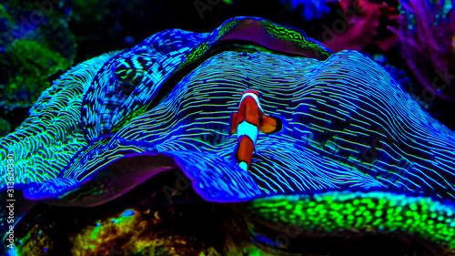 Fototapeta Beautiful colorful coral reef and sea anemones in amazing light, all shines in c