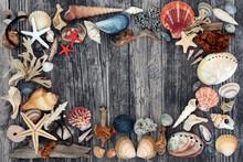Seashell, Driftwood, Pebble & ...