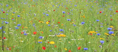 Fototapeta wildflower meadow obraz