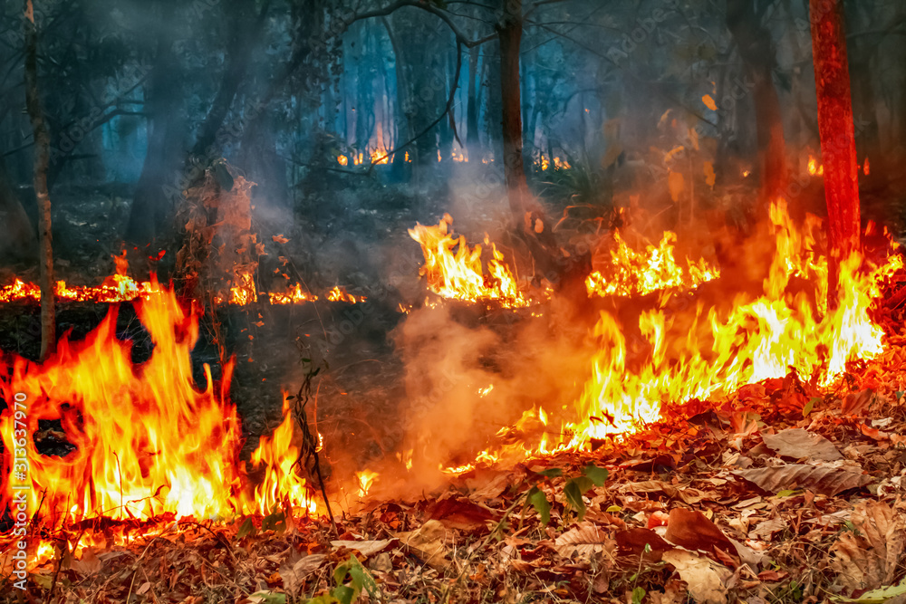 Fototapeta The bushfire crisis under climate change