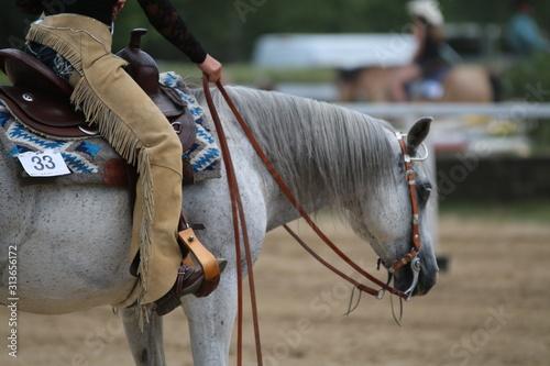 konie w stylu western